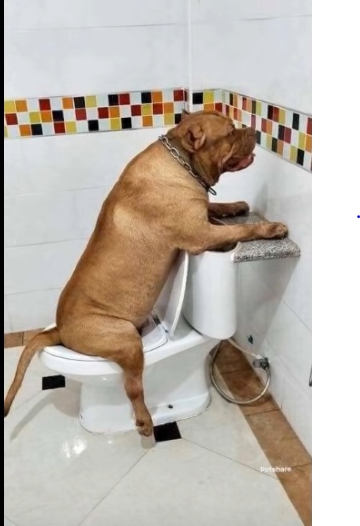 Dogpee.PNG
